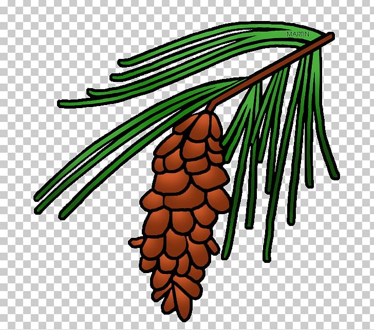 Longleaf Pine Loblolly Pine Conifer Cone Tree PNG, Clipart.