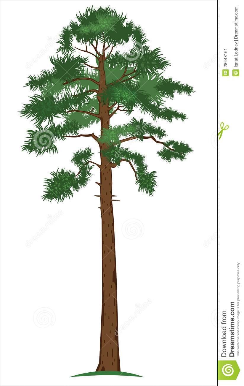 Vector Pine.