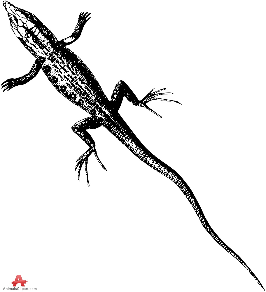 Drawing Clipart of Lizard with Long Tail.