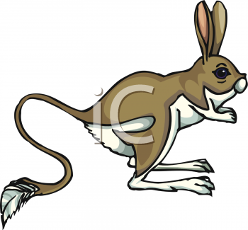 Jack Rabbit with a Long Tail.