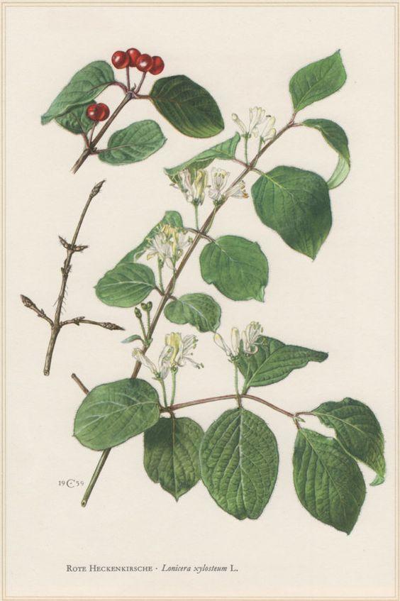 Etsy and Botanical prints on Pinterest.