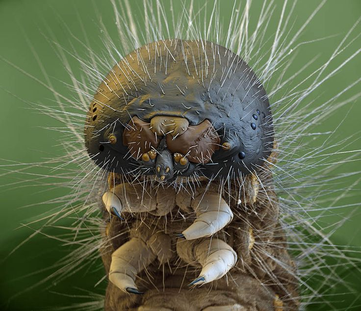 1000+ images about Caterpillars on Pinterest.