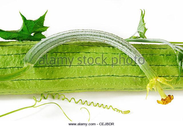 Loofah Gourd Stock Photos & Loofah Gourd Stock Images.