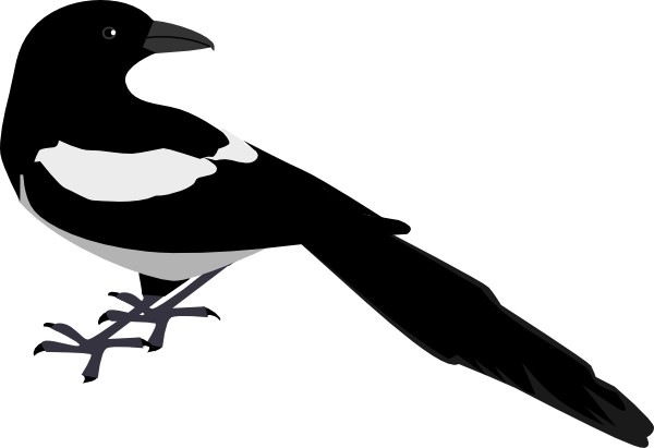Magpie Looking Back Clip Art at Clker.com.