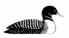Collection of Loon clipart.