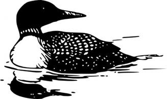 Common loon clipart.