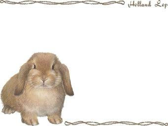 Holland Lop (Rabbit) clipart graphics (Free clip art.