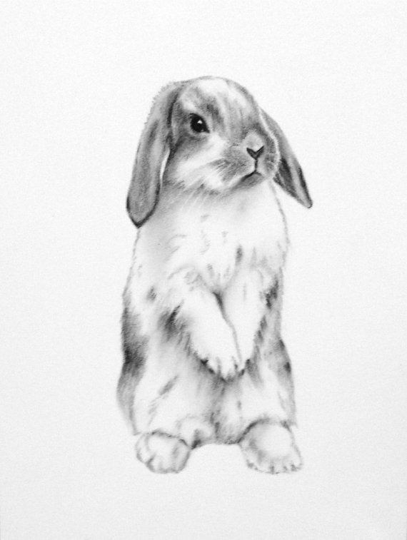 Lop eared rabbit clipart.