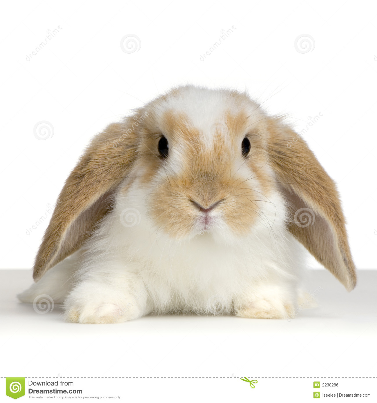 Lop Stock Photos, Images, & Pictures.