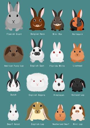 49 Lop Rabbit Stock Vector Illustration And Royalty Free Lop.
