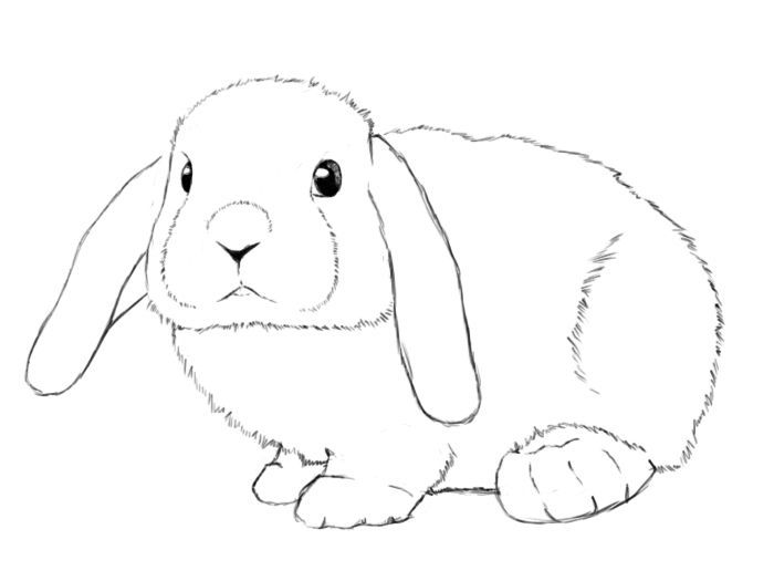 bunnies clipart mini lop #1067.