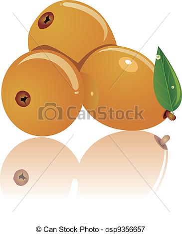 Vectors Illustration of three loquat.