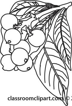 Plants : loquat.