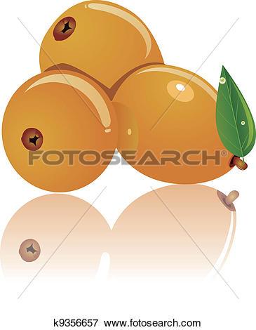 Clip Art of three loquat k9356657.