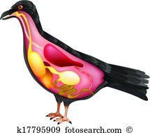 Bird lore Clip Art Royalty Free. 43 bird lore clipart vector EPS.