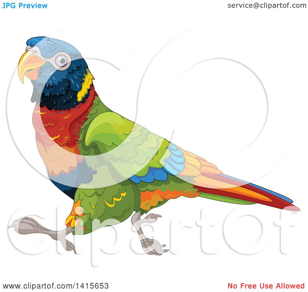 Clipart of a Wonder Rainbow Lory Bird Running.