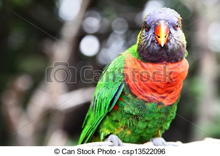 Stock Photographs of Colorful parrot.
