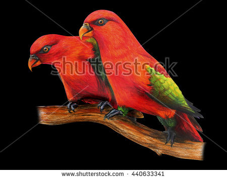 Couple Parrots Red Stock Photos, Royalty.