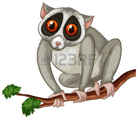 57 Loris Stock Vector Illustration And Royalty Free Loris Clipart.