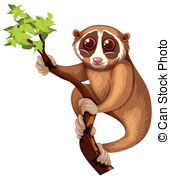 Loris Illustrations and Stock Art. 39 Loris illustration and.