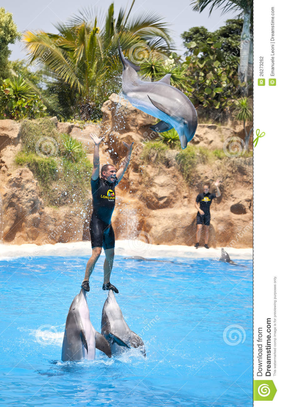 Dolphin Show In The Loro Parque, Tenerife Editorial Photography.