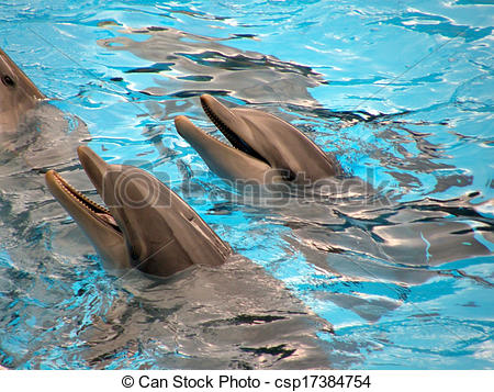 Stock Images of Dolphins in Loro Parque, Tenerife, Spain.