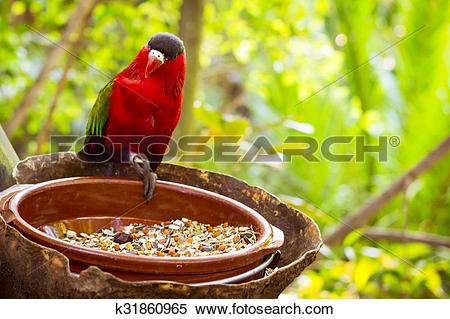 Stock Image of Bright parrot is feeding from bowl with seeds in.