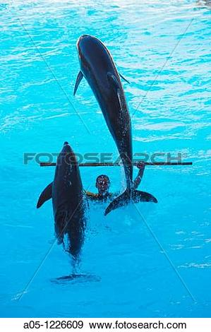 Stock Photograph of Dolphin Show Loro Parque Puerto de la Cruz.