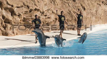 """Pictures of """"Dolphin Show, Loro Parque zoo, Puerto de la Cruz."""