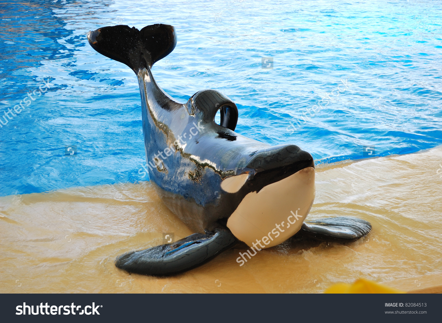 The Orcas Show In Loro Parque, Tenerife Island, Spain Stock Photo.