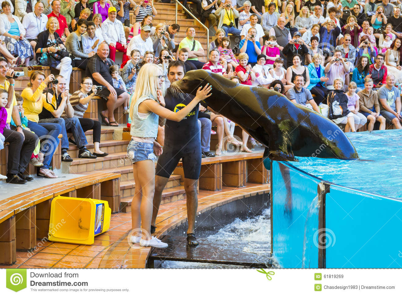 Show With Dolphins In The Pool, Loro Parque, Tenerife Editorial.