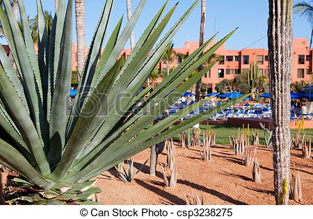 Stock Images of desert plants in a vacation resort in los cabos.