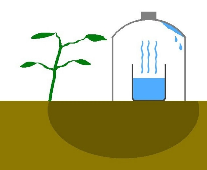 Here Is An Ingenious Technique To Irrigate Plants And Save A Lot.