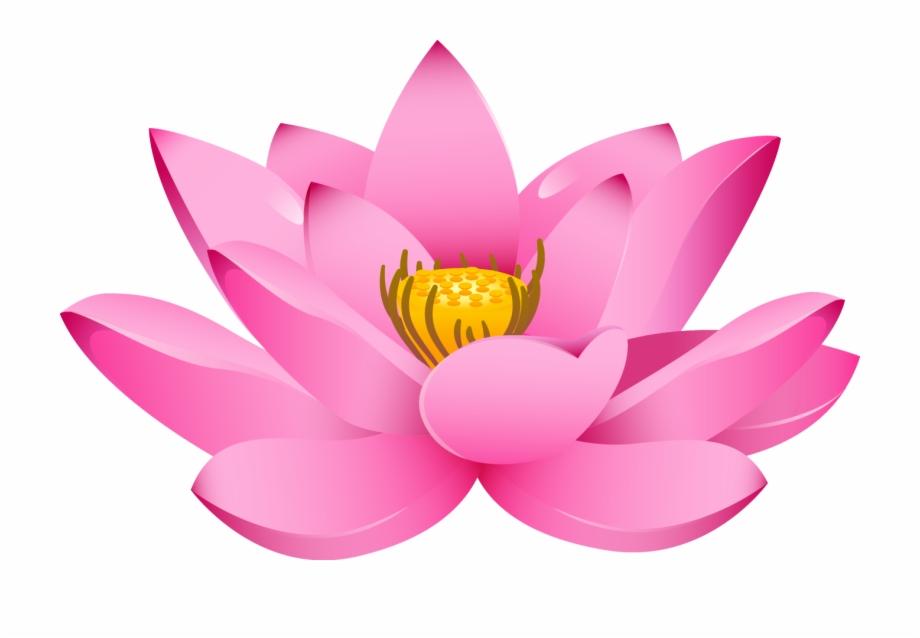 Lotus Flower Png Padma Flower Hd Png.