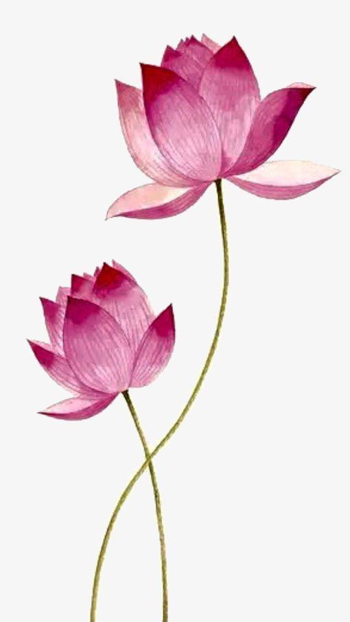 Pink Lotus, Lotus Clipart, Pink, Lotus PNG Transparent.