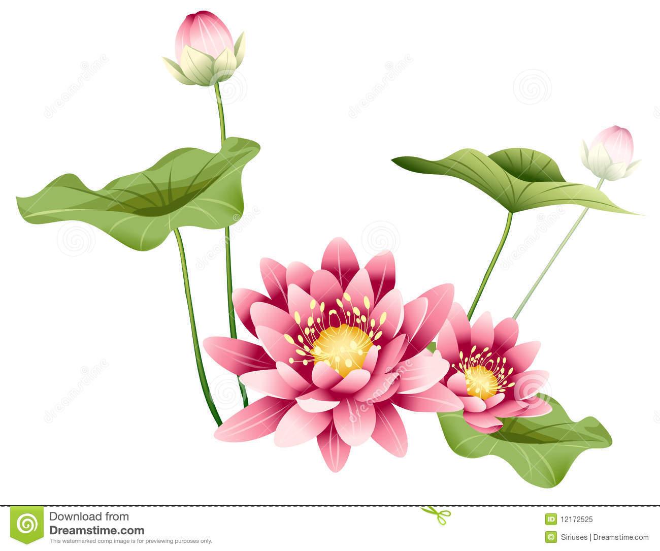 Beautiful Yellow Flower Lotus Corniculatus Beautiful Petals Stock.