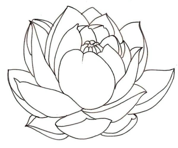 Lotus flower clipart black white.
