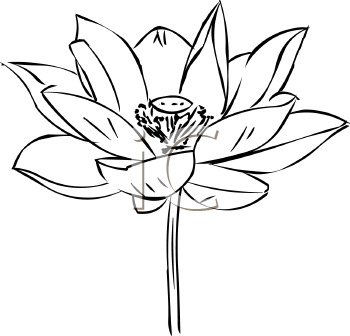 Lotus Flower Clipart Black White 20 Free Cliparts Download