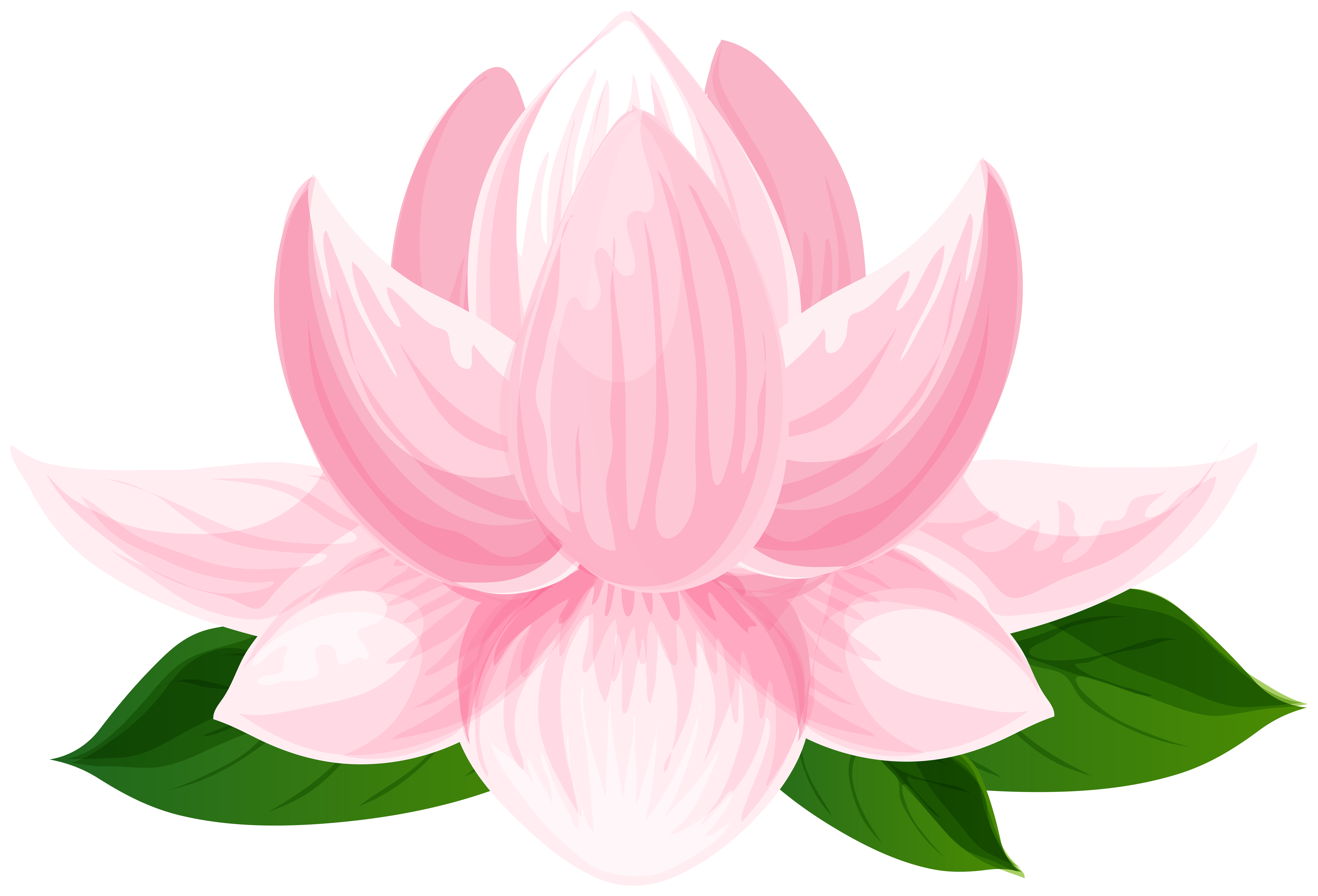Lotus Flower Transparent Image.