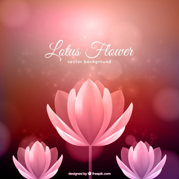 Lotus Flower Image Free Clipground