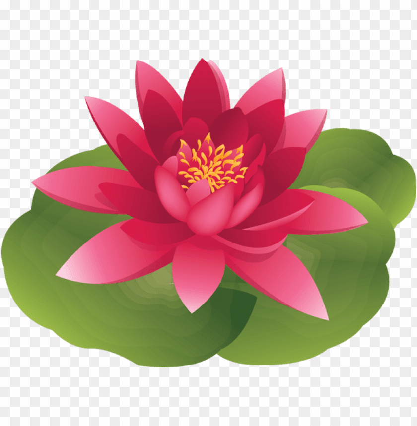 lotus water lily flower clipart.