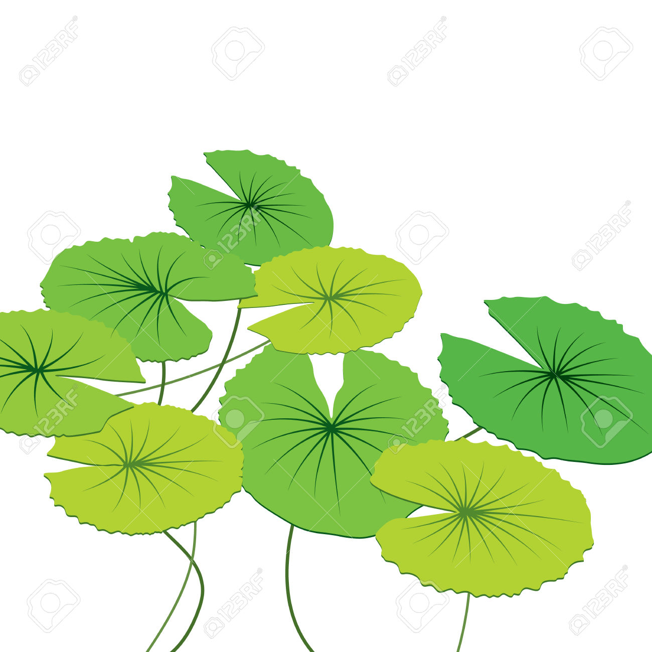 Lotus Leaves, Vector Illustration Royalty Free Cliparts, Vectors.