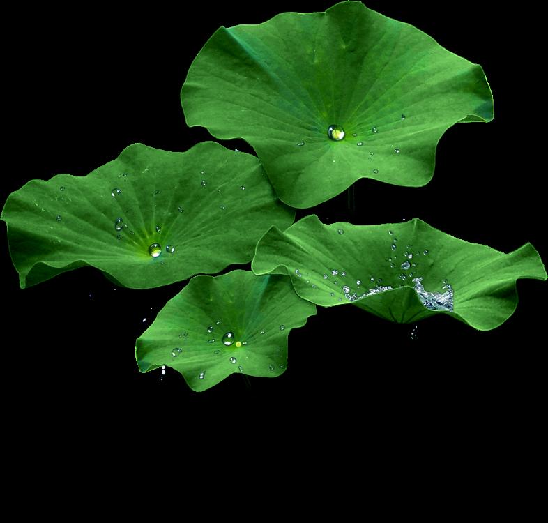lotus png.