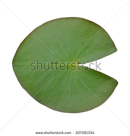 Lotus leaf clipart.
