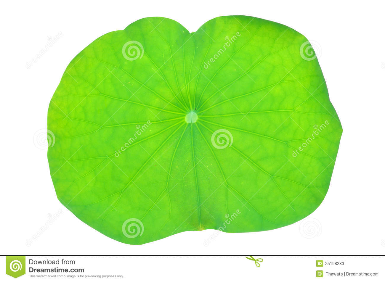Lotus Leaf Royalty Free Stock Photos.