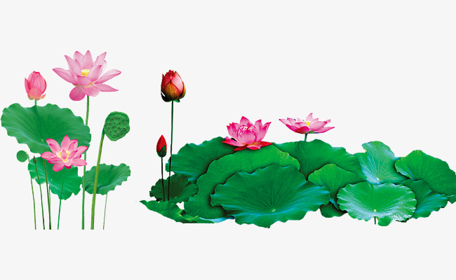 2293 Lotus free clipart.