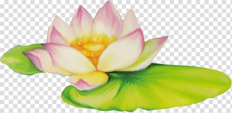 Nelumbo nucifera Flower Drawing , lotus flower transparent.