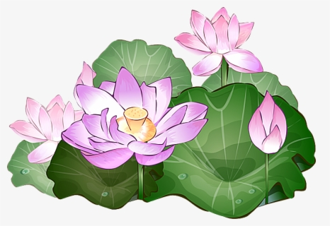Free Lotus Clip Art with No Background.