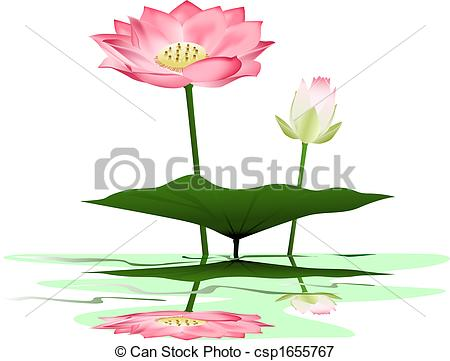 Vectors Illustration of Lotus.