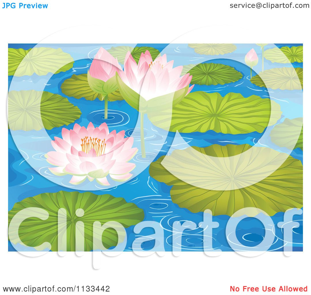 Cartoon Of A Water Lily Lotus Pond With Pads 3.